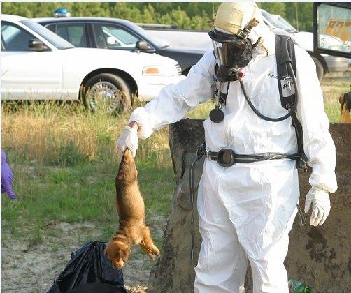 PETA cruelty with animals