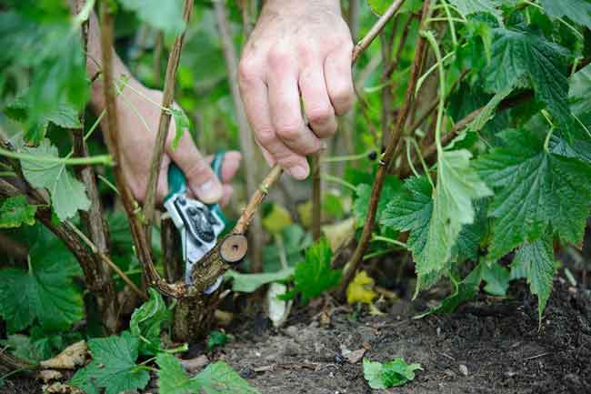 Cutting and pruning Clever Garden hand tools