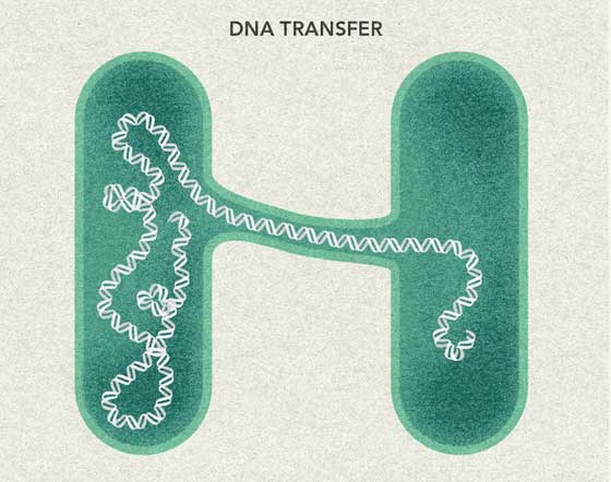 Mitochondrial DNA Transfer