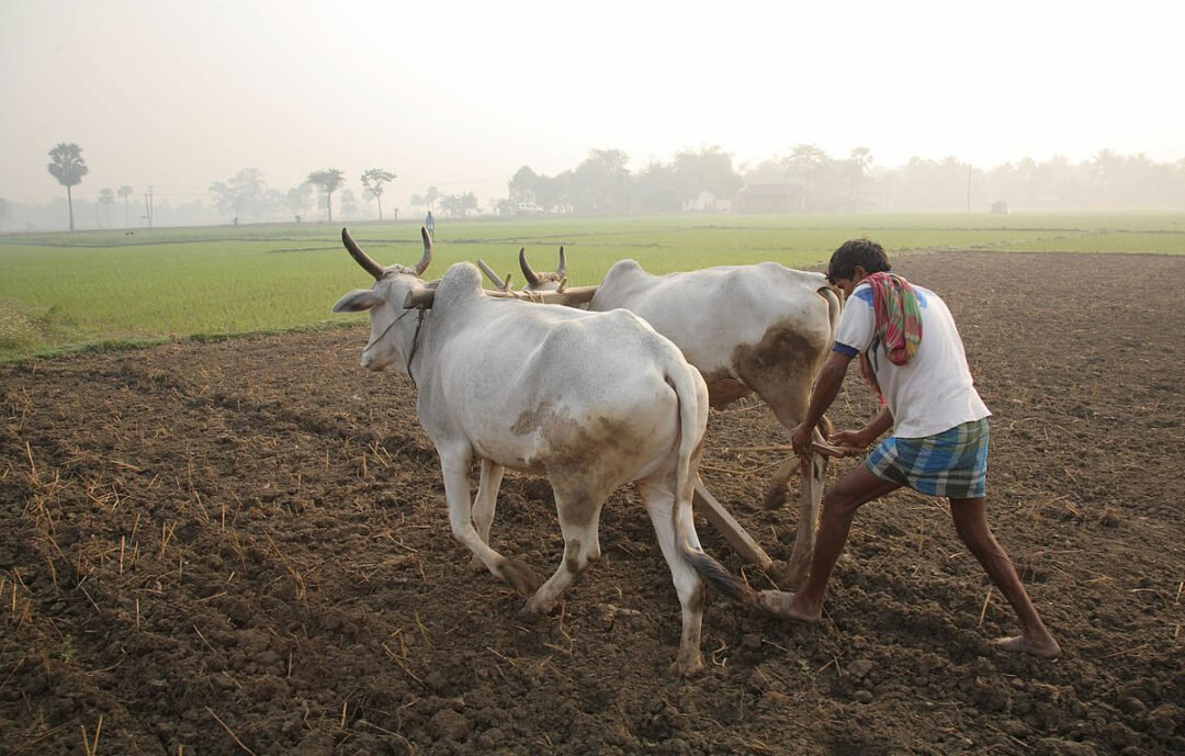 5 Tips to Improve the Agriculture Productivity in India