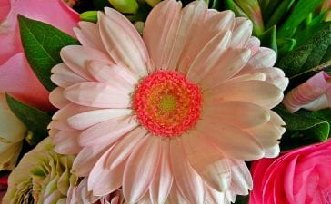 Know The Tips Before You Gift The Flowers