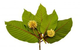Top 5 Benefits of Kratom Leaves