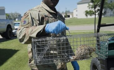 SEO and Digital Marketing to Grow Your Wildlife Removal Business Faster