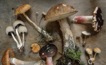 Medicinal Benefits Of Mushroom T