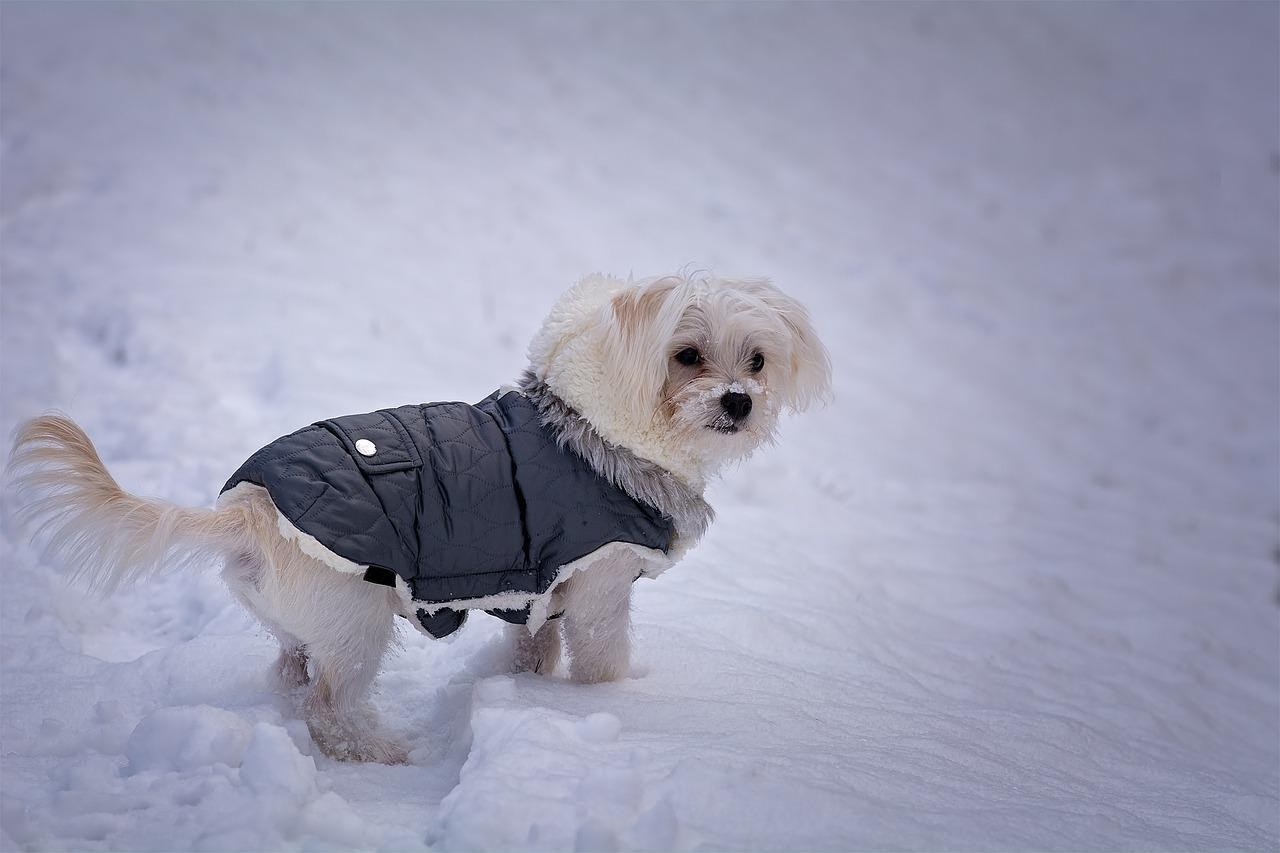Insulated Dog Coat