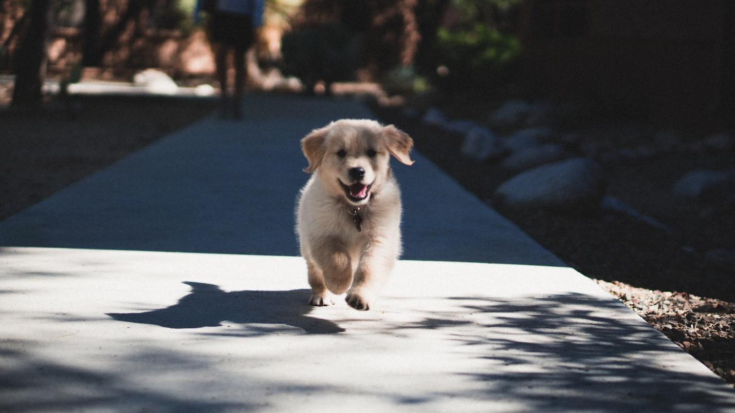 Tracker for pet