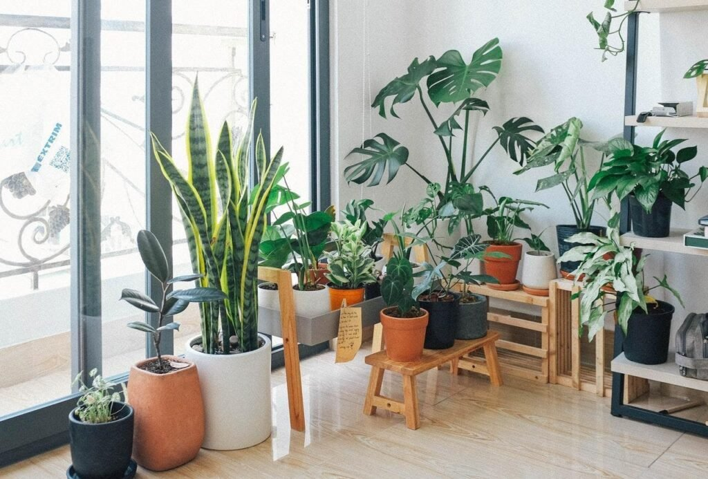 Plants with low maintenance