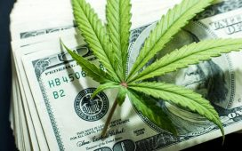 Hire Content Writers for Weed And Grow Your Business
